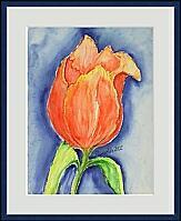 rote Tulpe; 30x40 cm