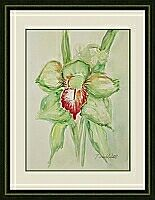 Orchidee ; 24x32 cm
