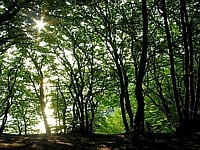 Klippenwald